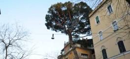 Il pino di via Pompeo Magno - copyright Barbara Ledda